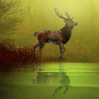 Sub-Gallery ID: 3936 Deer