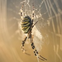 Sub-Gallery ID: 3671 Spiders