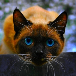 Avatar ID: 114423