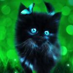 Avatar ID: 114337