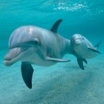 Sub-Gallery ID: 6072 Dolphins