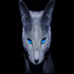 Avatar ID: 15672