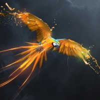Avatar ID: 161022