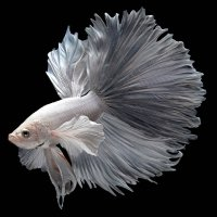 Avatar ID: 164368