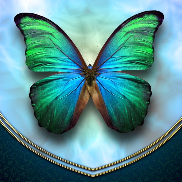 Avatar ID: 185538