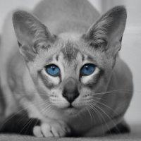 Avatar ID: 215259