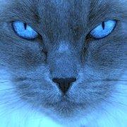 Avatar ID: 248008