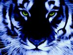 Avatar ID: 25279
