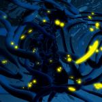 Avatar ID: 256510