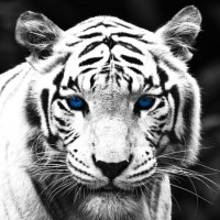 Avatar ID: 292833
