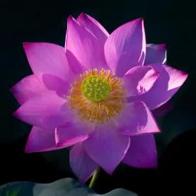 Avatar ID: 295589