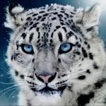 Avatar ID: 38715