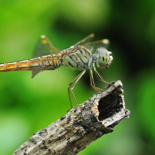Dragonfly Forum Avatar | Profile Photo - ID: 55007 - Avatar Abyss