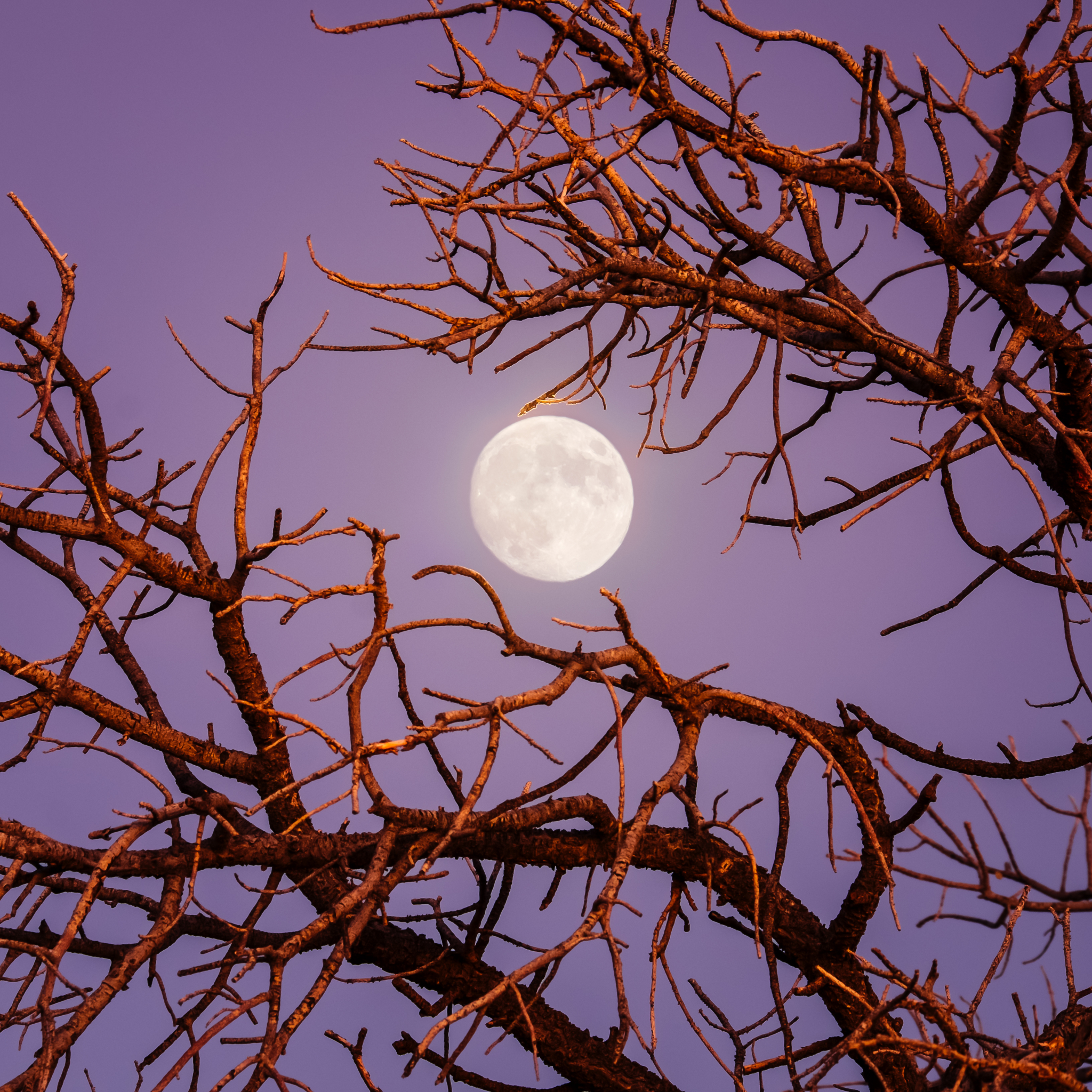 только весенняя луна картинки есть, при одном