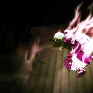 Avatar ID: 81287