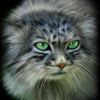 Avatar ID: 87149