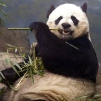 Preview Pandas